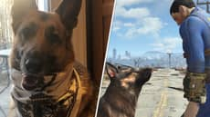 The Dog That Inspired 'Fallout 4' Companion Dogmeat Has Died, Gamers Share Touching Tributes
