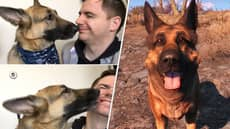 Bethesda Pays Tribute To Fallout Star Dogmeat, Donate $10,000 To The Humane Society