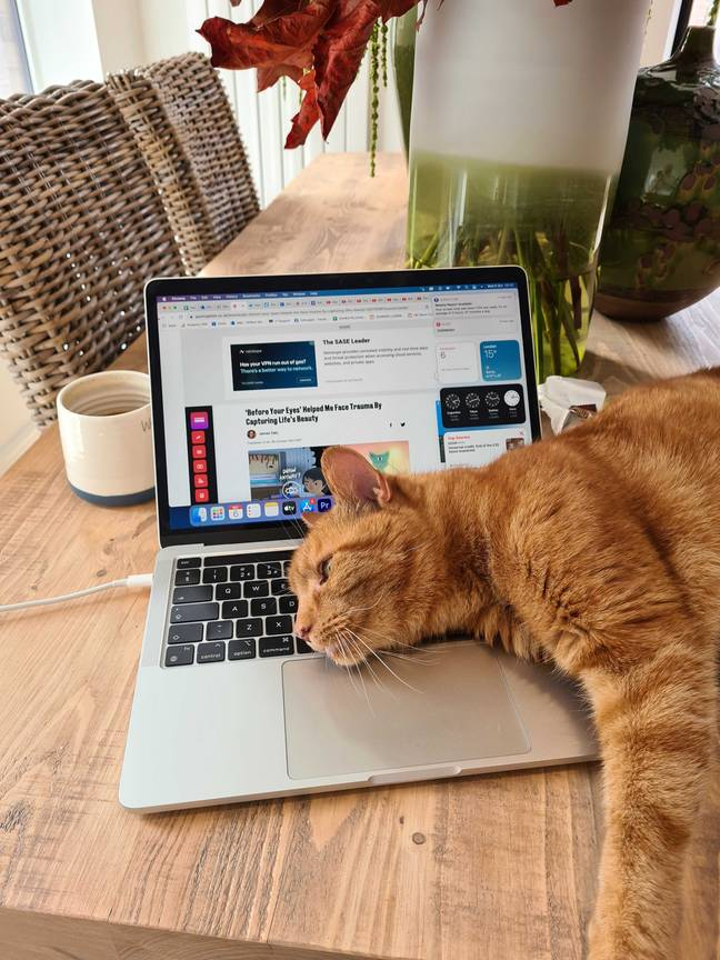 Fudge the cat helping with our social editor's day to day tasks / Credit: Will McCue
