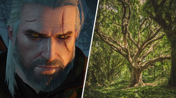 Several Historic Trees In Poland Have Been Named After Witcher Characters