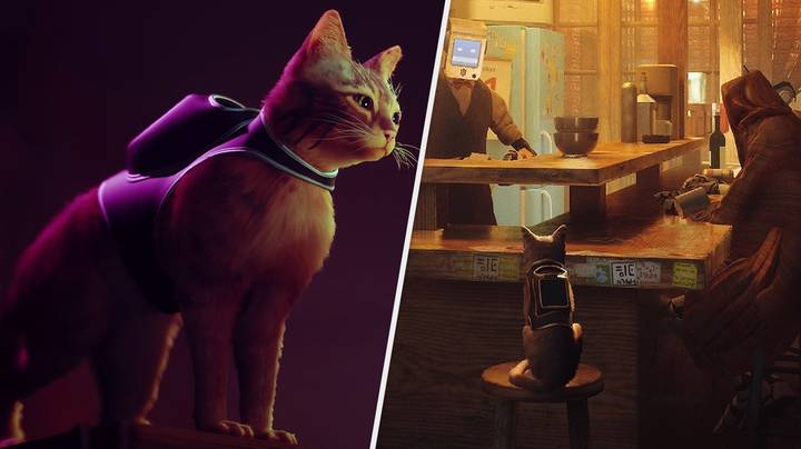 Backpack-Wearing Cat Detective Simulator 'Stray' Launches This Year, Sony Confirms