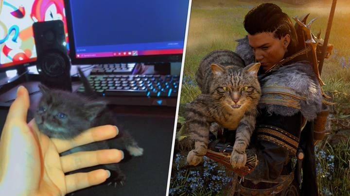 """PC User Asks Internet To Help Name New """"Gamer Kitty"""", Chaos Ensues"""
