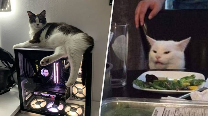 Cat Who Refuses To Stop Sleeping On Gaming PC Leads To Super Wholesome Advice Thread