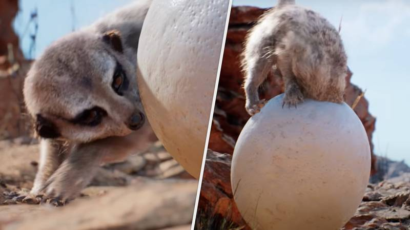 Mind-Blowing Unreal Engine Demo Showcases Photorealistic Animals And Environments
